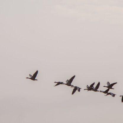 Services - Cloud Advisory & Migration